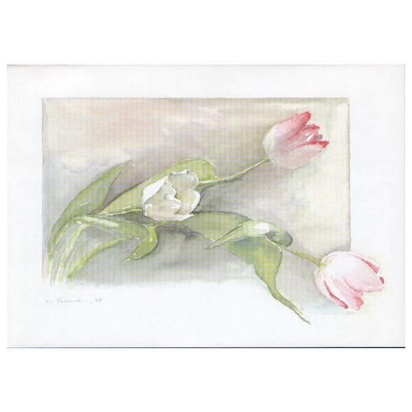 017 - Tulpen