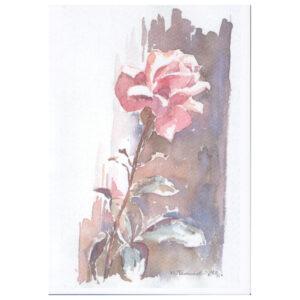 027 - Rosa Rose